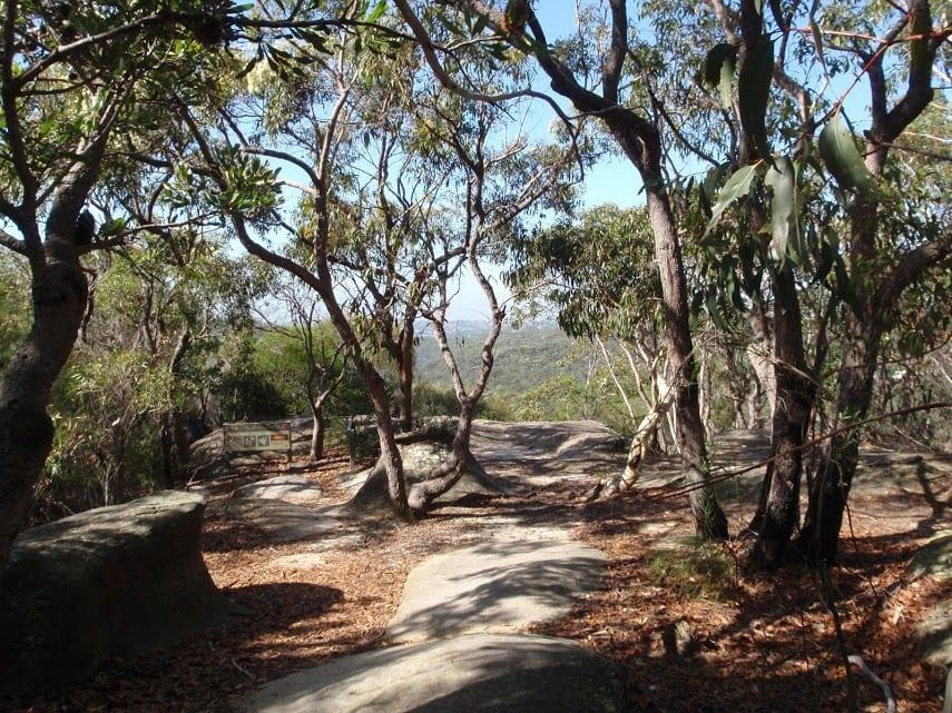 The Bluff Track