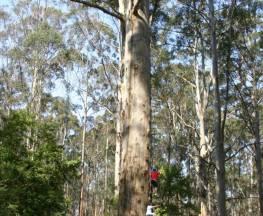Gloucester Tree to Cascades Tramway Walk