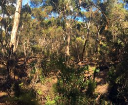 Kangaroo Island Wilderness Trail - Day 5: Kelly Hill Section