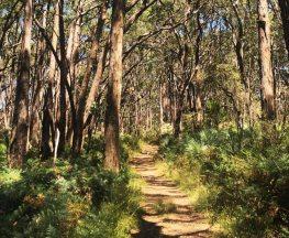 Lobethal Bushland Park Trails