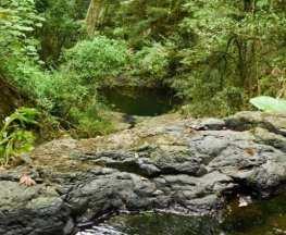 Barker Creek Circuit Bunya Mountains National Park
