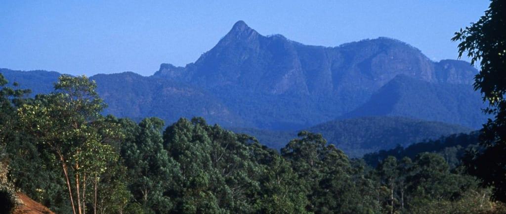 Mount Warning Summit Trail