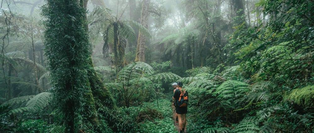 Green Mountains Rainforest Walk Lamington National Park