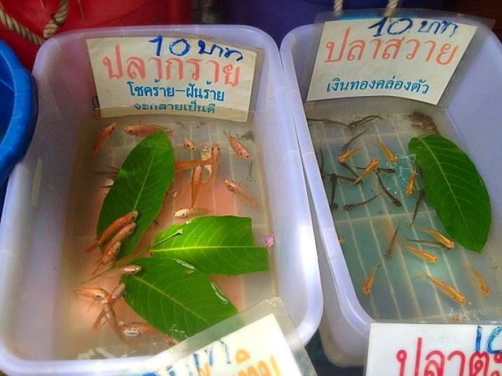 Taling Chan Floating Market - Bangkok - Merit