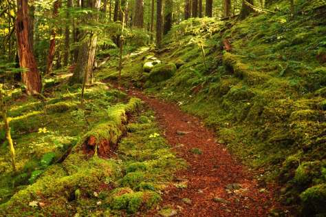 A trail through a mossy forest