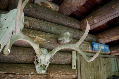 A fruit jar with papers in it attached horizontally to the inside wall of a log cabin above a large pair of deer antlers.