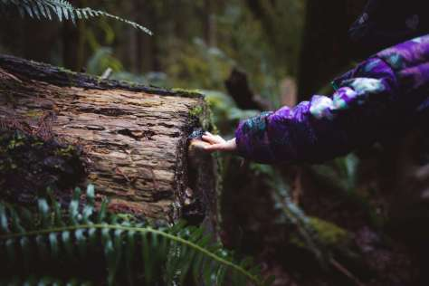 A baby's hand reaching to touch a fungal conk growing from the cut end of an old log.