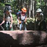Three people look at a log across a hiking trail.