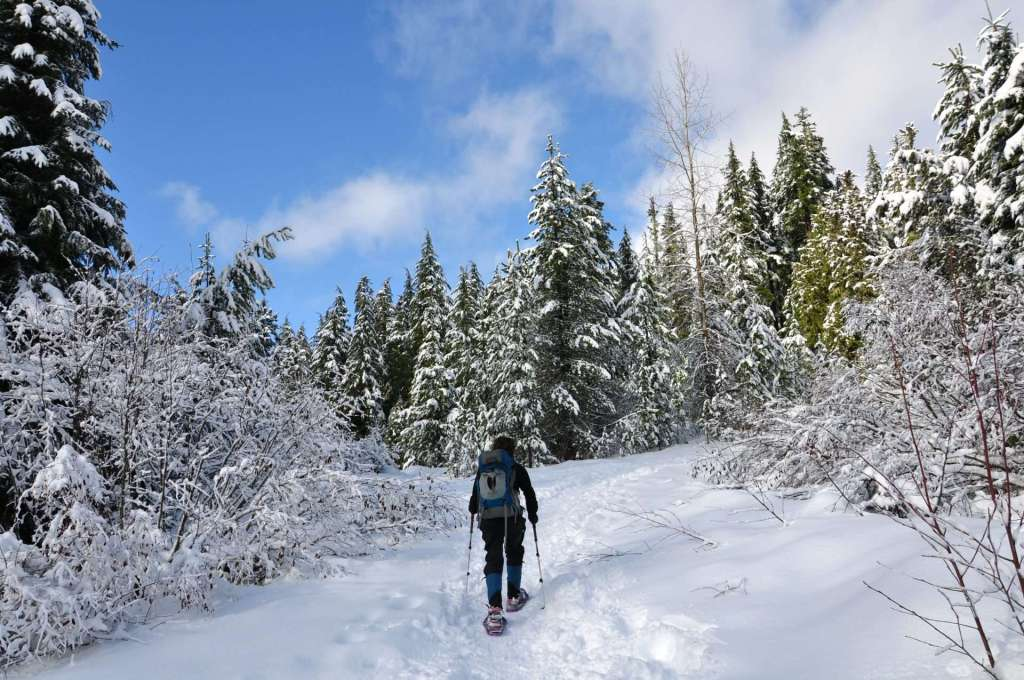 A woman on snowshoes walks a trail through snow-covered trees.