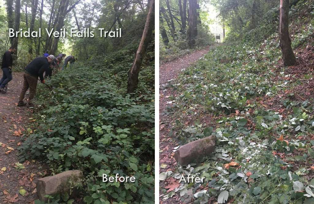 "A ""before"" photo of a half-dozen workers bending over two-foot tall bushes along a trail, and an ""after"" photo of the same area with just leaves left on the ground."