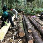 Three men wearing hardhats with tools in hand, bending over logs.