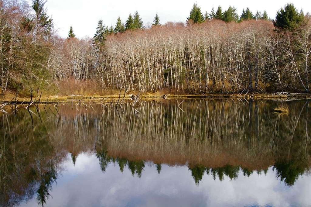 A lake reflecting leafless alder trees.
