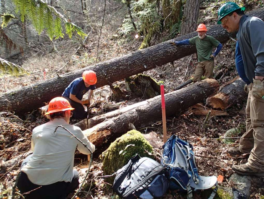 Two workers on either end of a long crosscut saw pulling it across a log while two other workers look on.