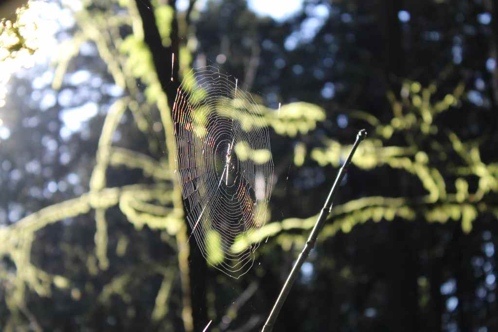 A spider web glistening in the sun.