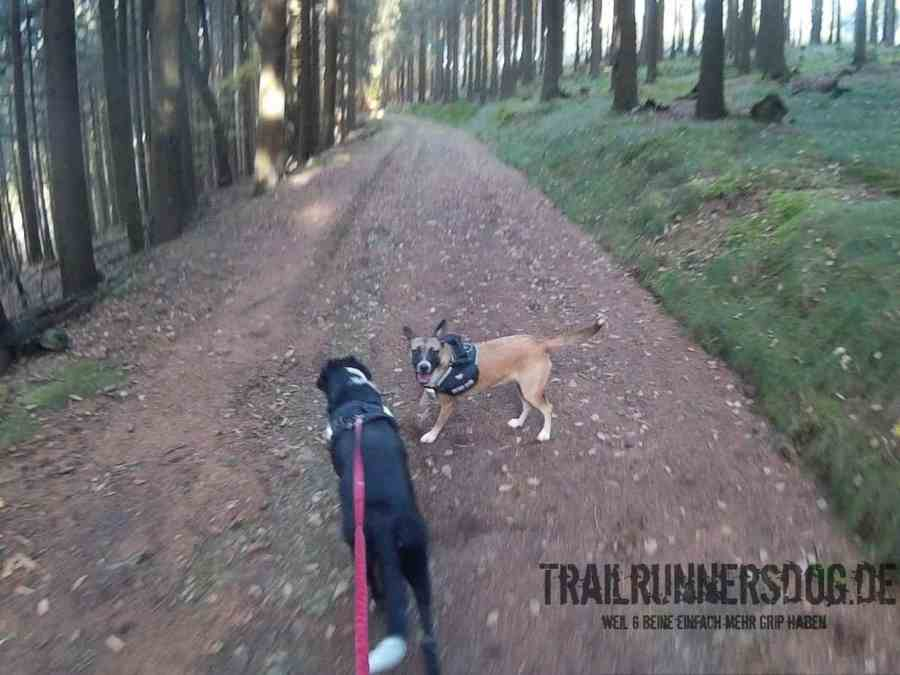 Trail Running mit Hund