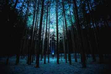 Teddy Kelley Mann im Wald bei Nacht