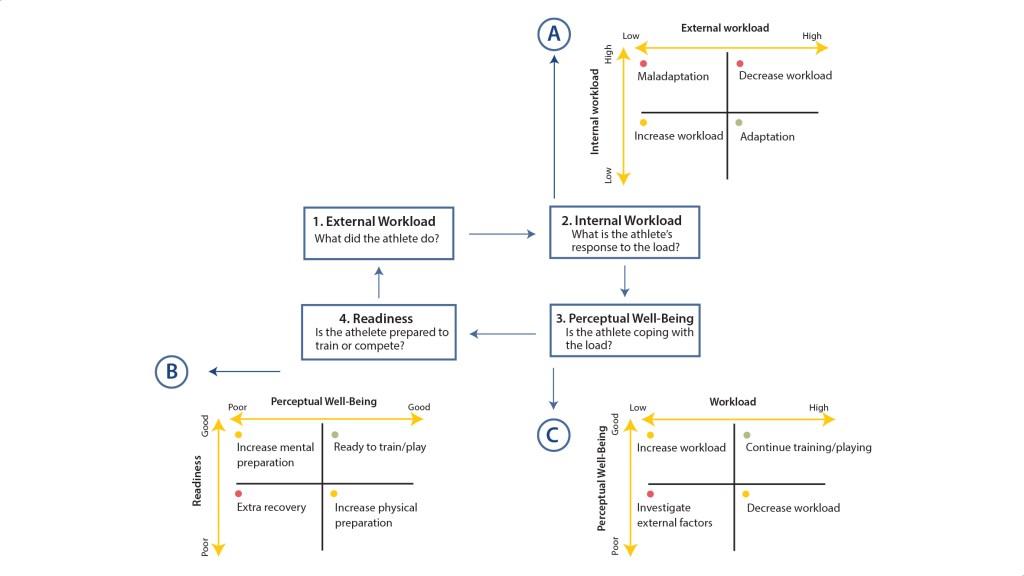 Ciclo de monitorización del deportista. Modelo propuesto por Gabbett et al. (2017) (Fuente: barcainnovationhub.com) - Monitorizar la carga