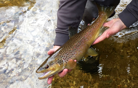 Fishing Reports Archives - Trails To Trout