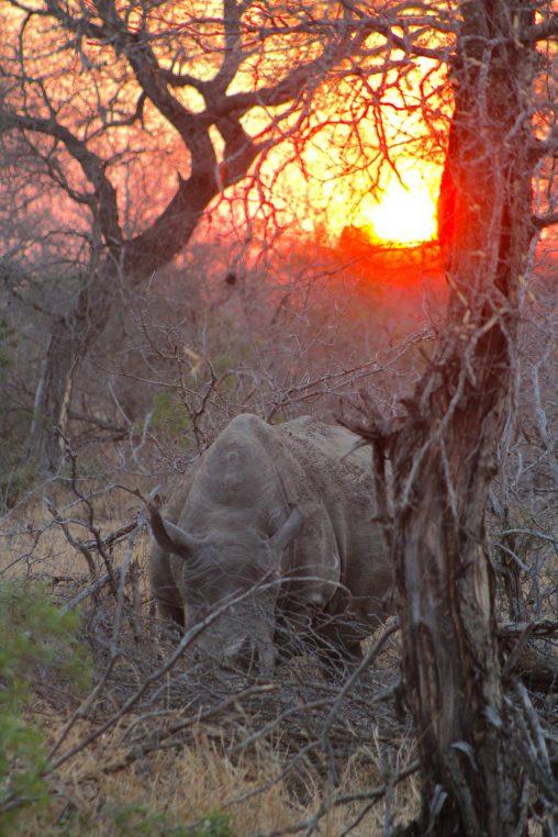 safari sundowner South Africa