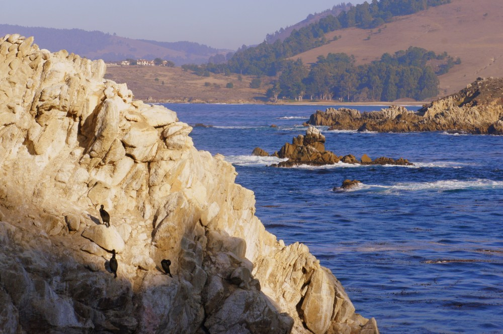 Three cormorants sun themselves in the late hours of the day in Point Lobos.