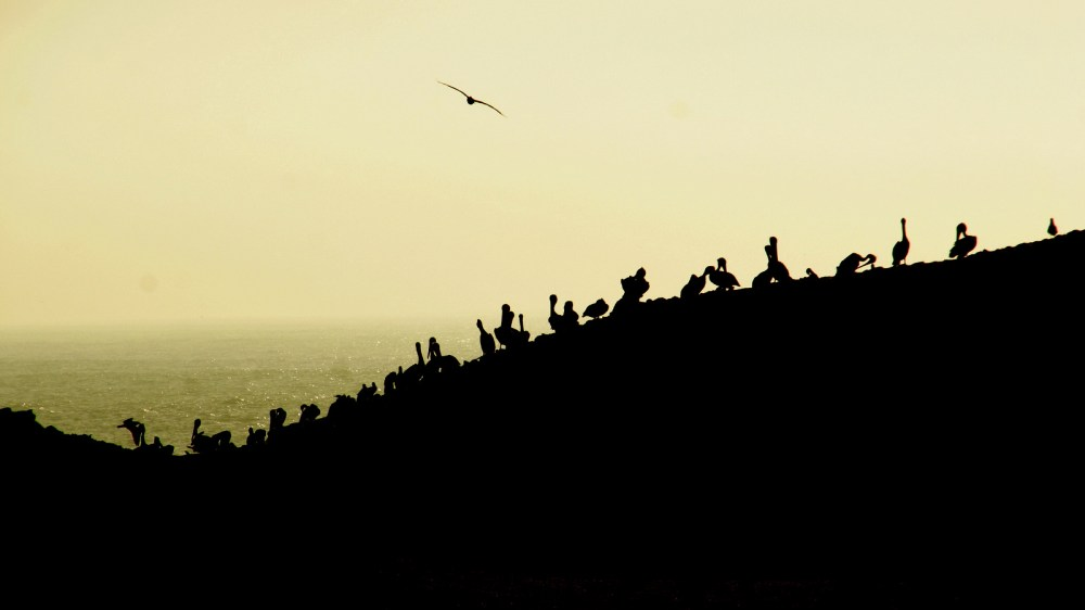 Point Lobos sunset with pelicans on Bird Rock.
