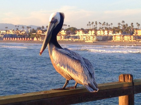 Sunset walk on the pier in Oceanside.