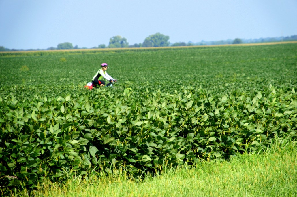 Chelsea rides through a field of soy in Illinois.