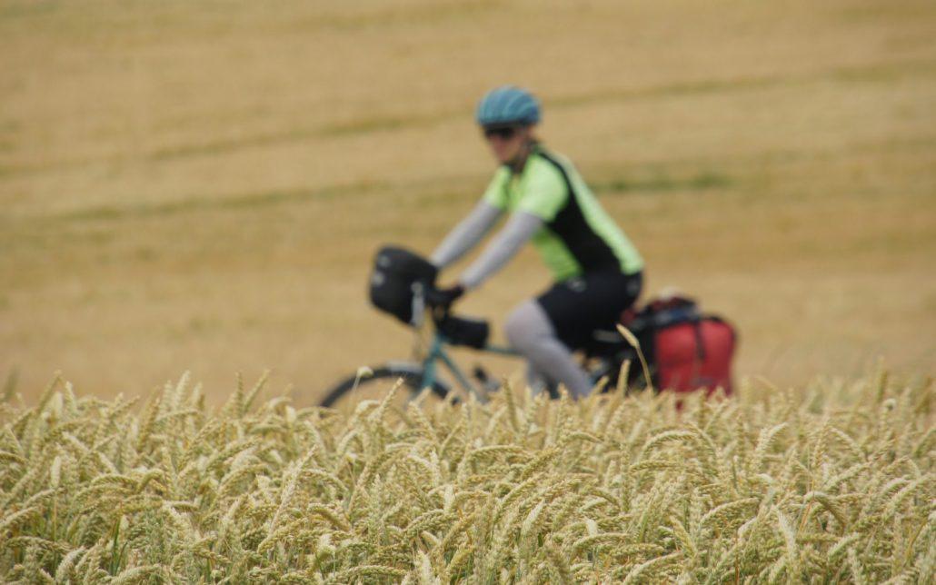 Wheat fields in Germany.
