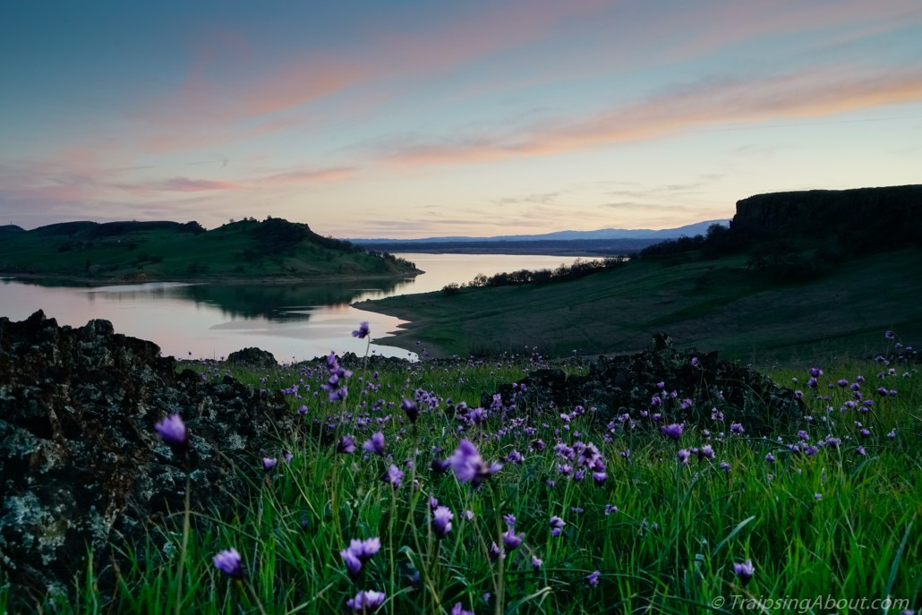 Black Butte Lake sunset flowers