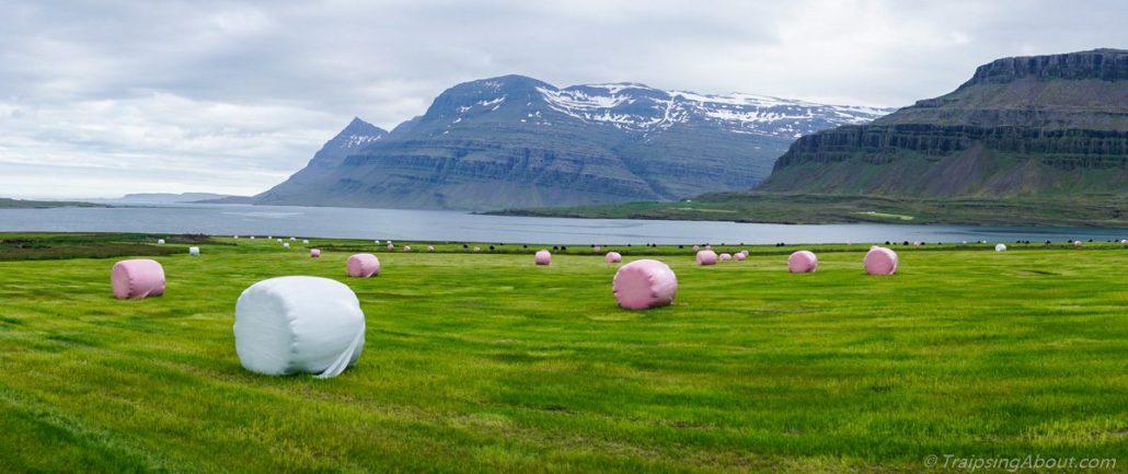 Breath-mint hay bales in a freshly mowed field in the east fjords.