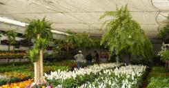 Turismo Xochimilco artesanias flores (12)