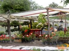 Turismo Xochimilco artesanias flores (4)