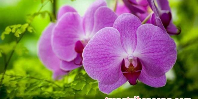 huong-dan-trong-va-cham-soc-hoa-phong-lan-3
