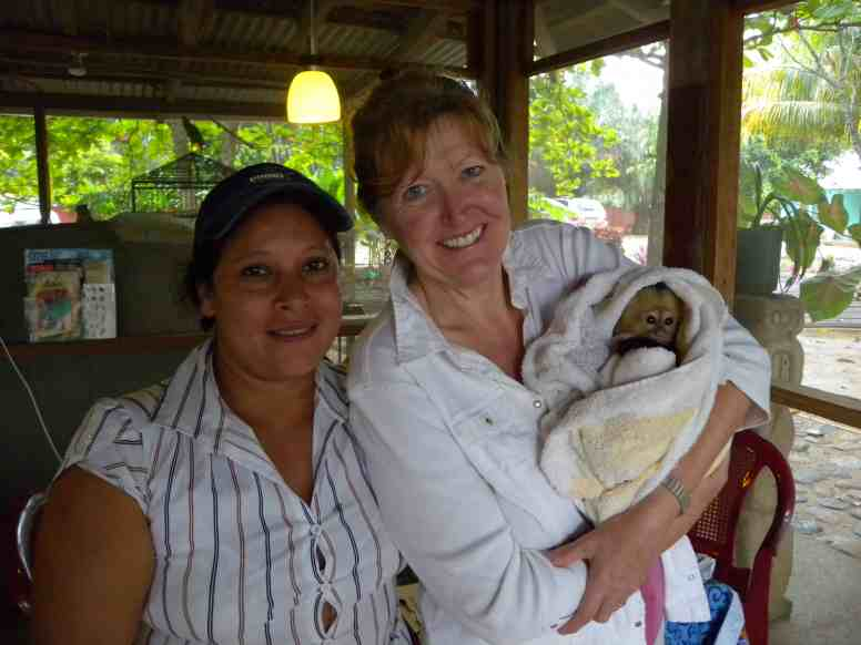 "Chimi becomes Tranquility Bay's adopted ""rescued"" Capuchin baby monkey"