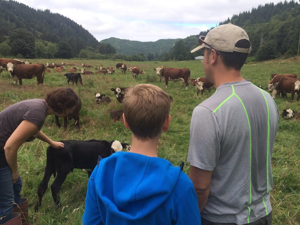 meeting cows