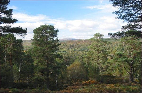 Black Wood of Rannoch, Scotland
