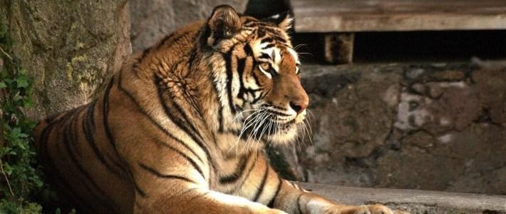 Rome Biopark – Zoo in Rome