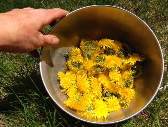 How to make homemade herbal dandelion face wash, directions, instructions, how to, herbal face wash, dandelion face wash, homemade herbal face wash