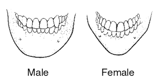 male and female chin differences