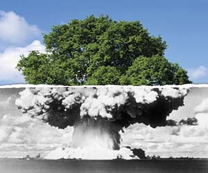 Bomba-arbol-resiliencia-transición sostenible