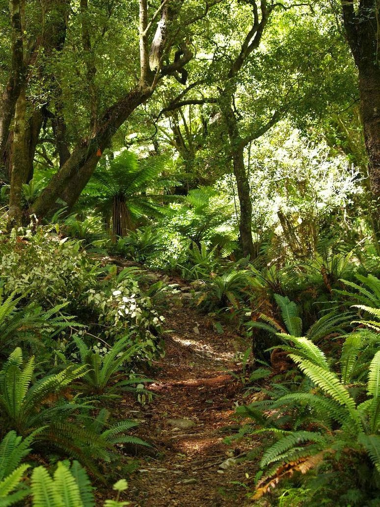 Nature - Suggestions For Spiritual Growth As Energy Beings
