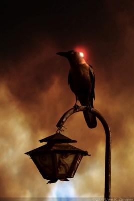 The Blind Raven