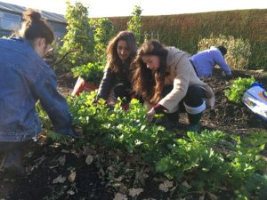The Kernel's Community Garden Session @ THe Kernel, St Andrews Botanic Garden