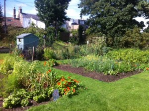 Monday Albany Gardening @ Albany Park Community Garden