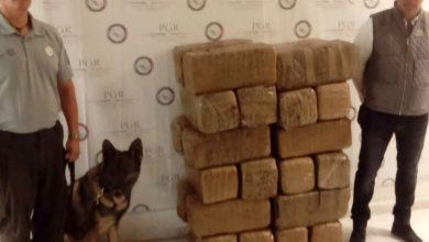 Photo of Aseguran 150 kilos de droga en empresa de diputado panista