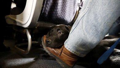 Photo of United creará una etiqueta especial tras muerte de perros en vuelos