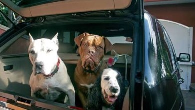Photo of Tips para transportar mascotas
