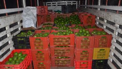 Photo of Se roban hasta 10 camiones de aguacate en Michoacán a la semana