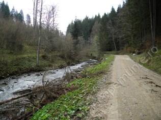 muntii-siriu_drum-forestier