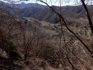 Valea Moasei Sebesului
